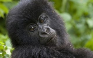 4 Days Gorillas & Wildlife Adventure