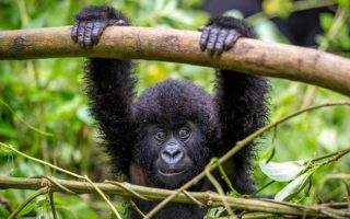 3 Days Affordable Gorilla Tour