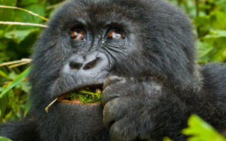 6 Days Gorilla Safari