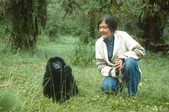 4 Days Gorillas, Golden Monkeys, Fossey