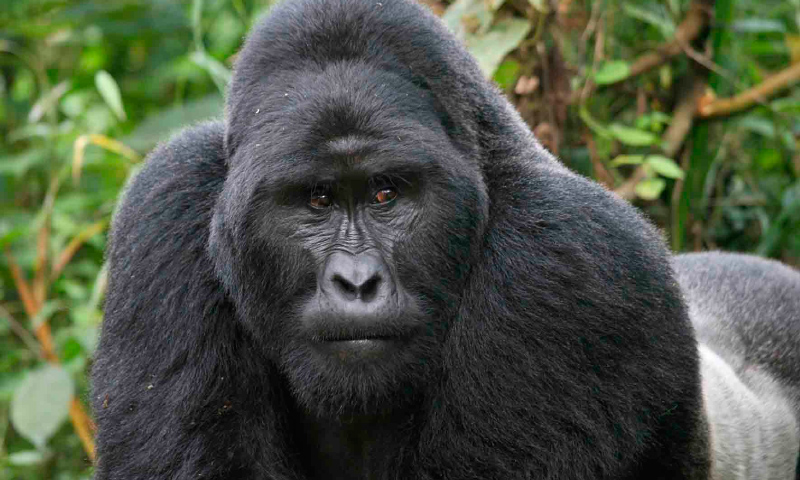4 Days Nyiragongo & Virunga Gorilla Trek