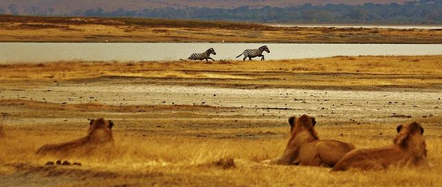 6 Days Rwanda Gorillas & Serengeti
